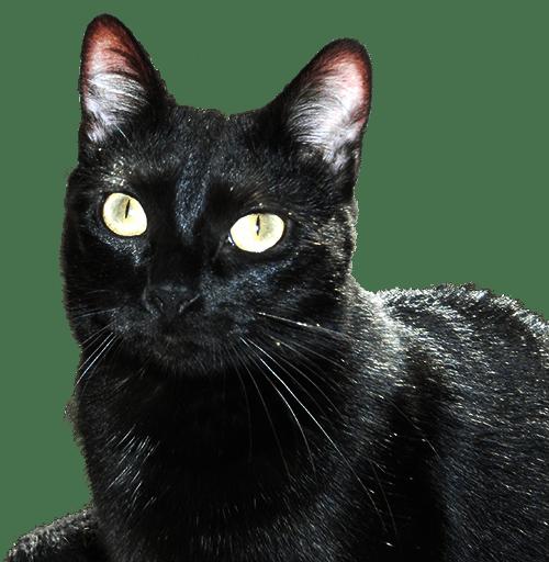 pension canine f line de l estoez garde de chat et chien cambrai nord. Black Bedroom Furniture Sets. Home Design Ideas